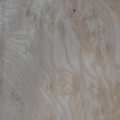 白栓树榴木皮