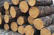 莆田木材批发