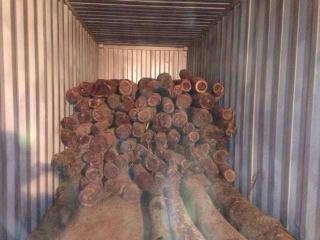 非洲血檀木