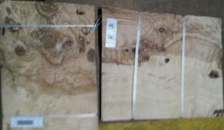 橄榄树瘤 木皮