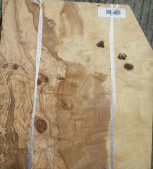 名贵木皮 橄榄树瘤