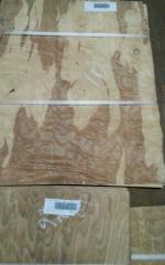 橄榄树榴 实木木皮