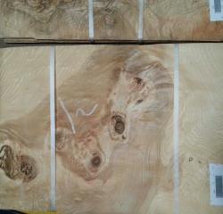 橄榄树榴木皮