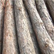 油松 坑木
