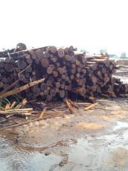 日本杉原木 柳杉木 香杉木 一手货源进口