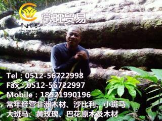 非洲巴花原木