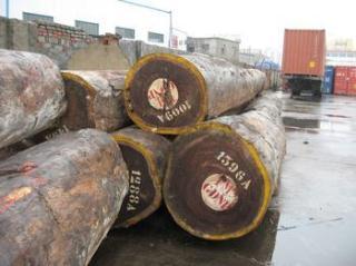 赞比亚血檀原木批发