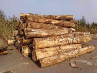 进口白橡原木