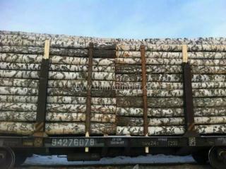 常年出售大量俄罗斯薄皮白桦原木