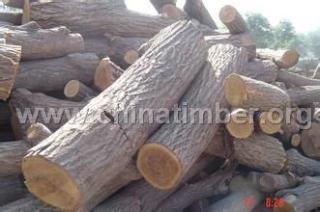 板栗树木原木、板材