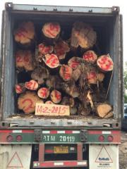 进口原木哥斯达黎加香柏木