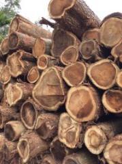 厂家直销马来西亚大叶小叶中叶相思木原木板材