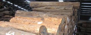 低价供应桧木原木