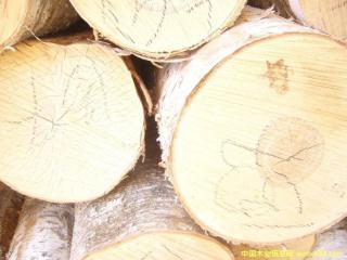 低价供应俄罗斯白松原木