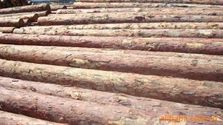 大量批发各种长度 矿用坑木 原木 板方材(同时出具