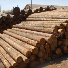 进口优质落叶松 木方板材原木可定制 各种古建筑用板