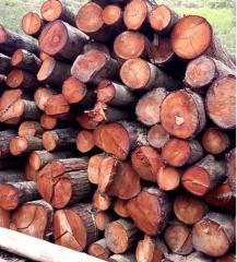 椿木原木及板材