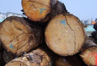 出售国内云杉原木