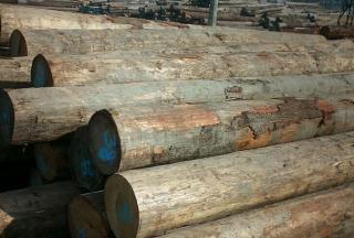 出售国内赤松原木