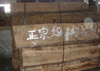 出售缅甸花梨木原木