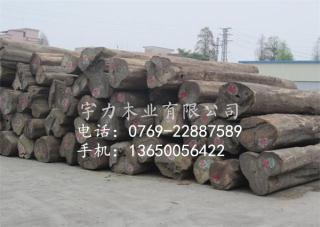 缅甸柚木原木