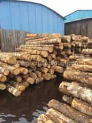 进口桦木原木