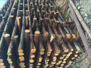 供应3米绿化杆 6米防护杆