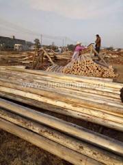 古建木屋用杉木杆 搭棚用杉木杆