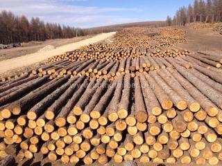 落叶松原木、檩条、坑木、打桩木、柁材