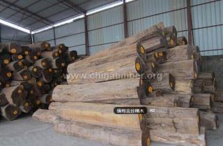 出售进口缅甸金丝楠木原木