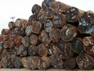 大量供应马来西亚菠萝格原木原材优惠批发零售
