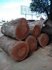 大量供应唐木/番龙眼原木原材进口木材现货