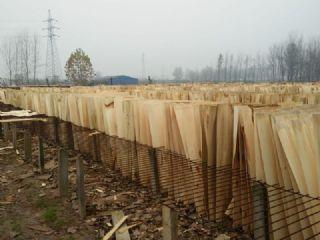 杨木夹芯板 杨木单板