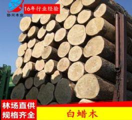 广东白蜡木厂家热销美国白蜡木水曲柳原木