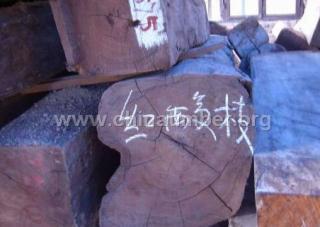 缅甸红酸枝原木