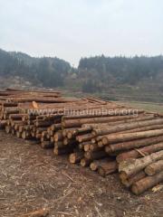 杉木原木方板料