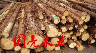 日本柳杉原木打桩木包装箱材料木材