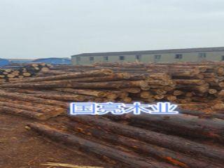日本杉打桩木日本柳杉 包装箱原材料原木