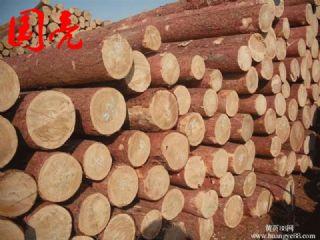 日本柳杉打桩木 煤矿坑木 包装箱材料原木