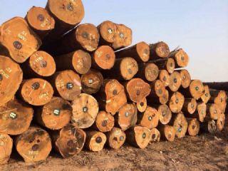 黄芸香原木木材 天然防腐黄芸香原木木材 家具材实木