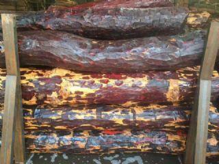 赞比亚血檀原木非洲小叶紫檀