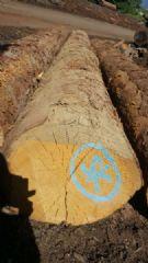 英格曼云杉原木