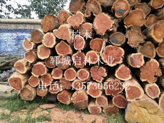 出售大直径柏木原木