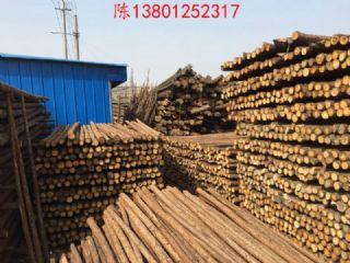 4米,6米杉木杆绿化杆大量批发