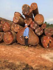 长期供应非洲优质红木