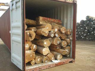 张家港现货供应阿根廷绿檀原木