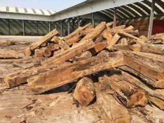 冈比亚刺猬紫檀木方原木最新到货