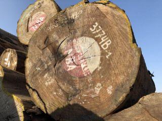 非洲刚果金柚木王刨切材原木大板料