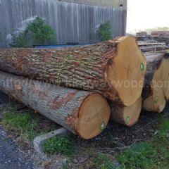 金威德国进口 白橡原木 原木木料 橡木家具刨切级