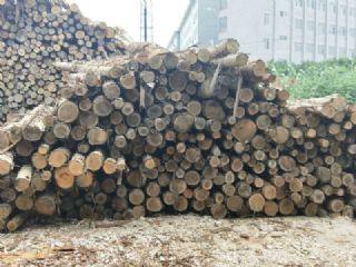 长期供应各种规格桉树原木